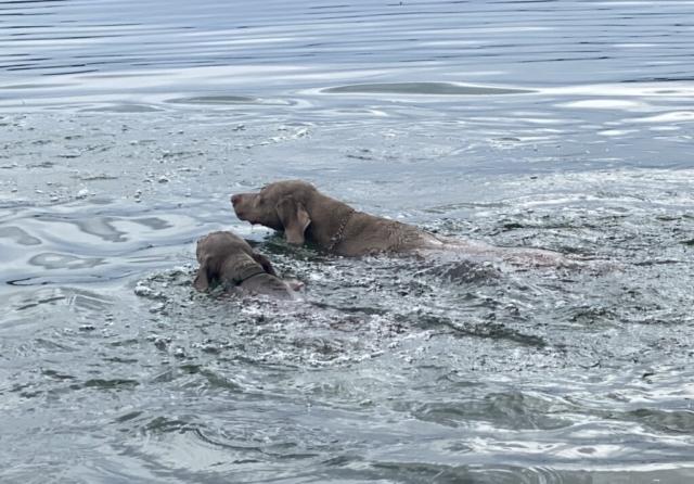 Schwimmen mit Tante Katy (4 Monate)